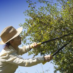 Factors to Consider When Looking For Tree Pruning in Marlboro, NJ