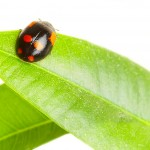 Services Offered By Most Exterminator Putnam County NY Firms