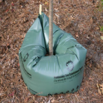 Why Do You Need a Tree Watering System?