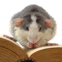 Eliminate Rodent Problems Using Expert Rat Control Services in Fairfax VA