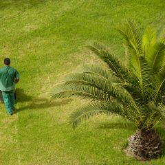 Create the Yard of Your Dreams with Landscape Renovation in Indianapolis, IN