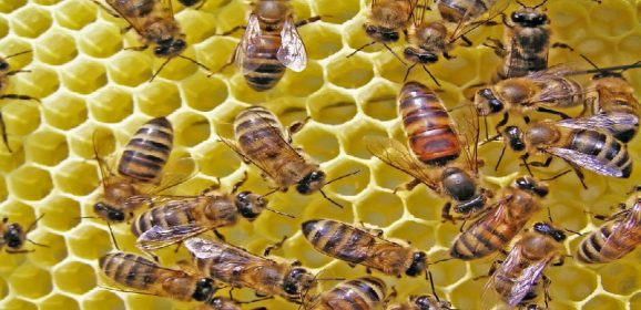 Locating A Hive And Eliminating A Honey Bee Swarm In Dublin OH