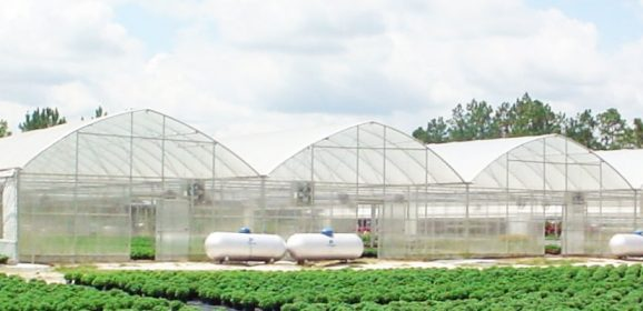 Industrial Greenhouses that are Built for Durability