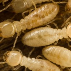 Call a Termite Inspection Company in Wellington, Florida If Termites Are Swarming Outside Your Home