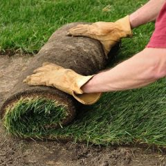 3 Benefits of Stump Grinding in Fort Myers FL