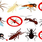 Finding A Pest Control Company