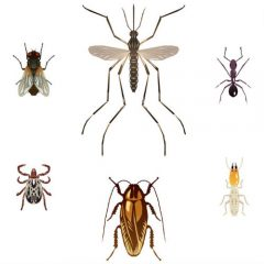 Mosquito Control Near Des Moines IA is Achievable When You Use a Professional Exterminator